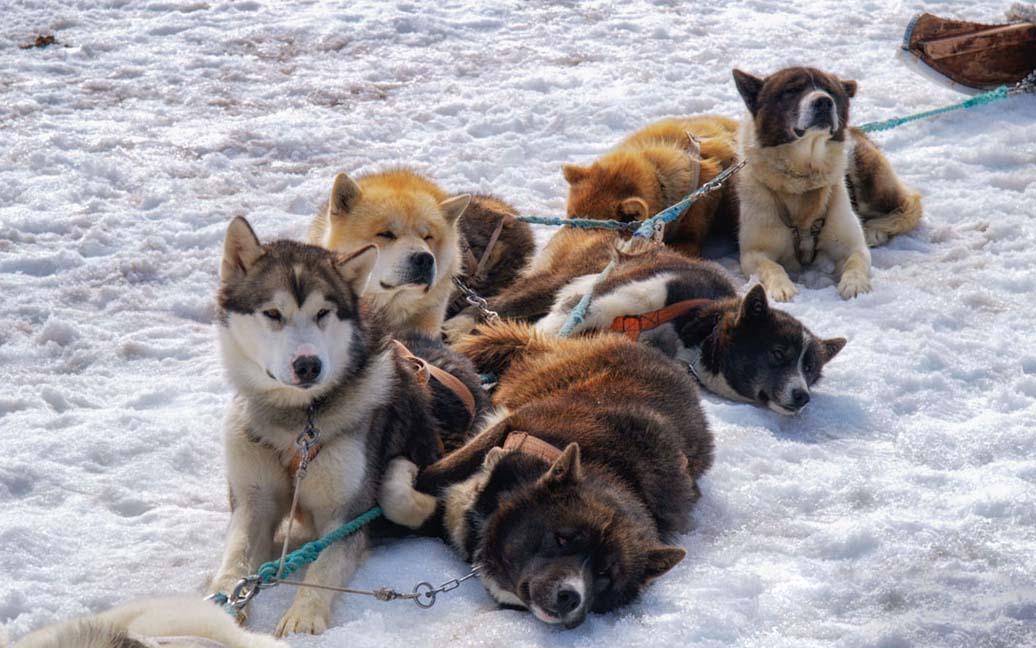 Hundeschlittenfahrt auf dem Langjökull
