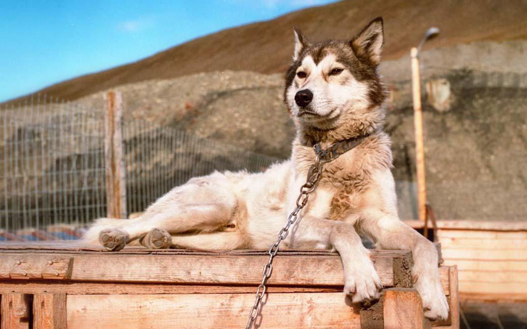 Huskies im Base Camp