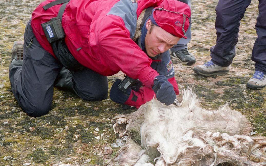 Jørn untersucht den toten Eisbär