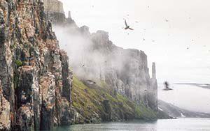 Alkefjellet – Trottellummen am Vogelfelsen