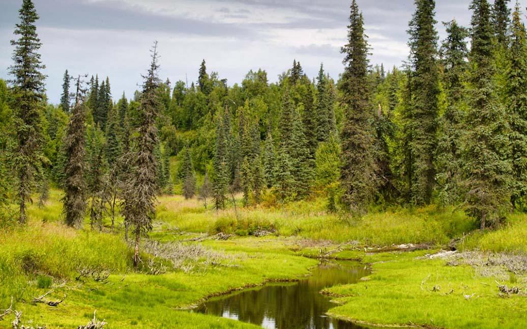 Trapper Creek, Peters Hills, die Goldgräbersiedlung – Besuch bei Wal*Mike's