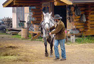 Der Chef persönlich bringt mein Pferd Lonesome