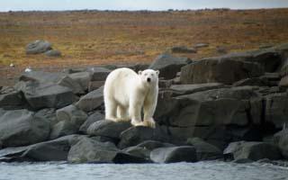 Svalbard im Reich des Eisbären